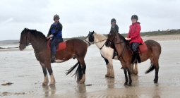 Horses at Cleggan and Omey 4