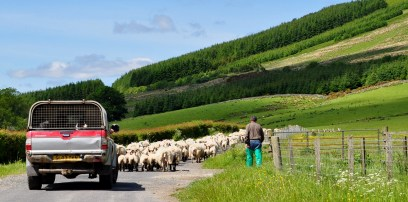 A shepherd looks after his sheep in the hills above Loch Lomond by by Bill Heaney