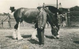 Filshie Willie with Clydesdale