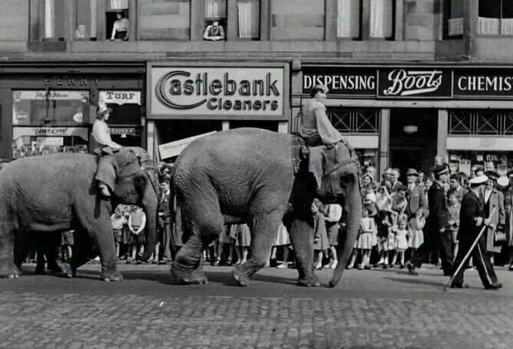 ELEPHANTS.jpg 2