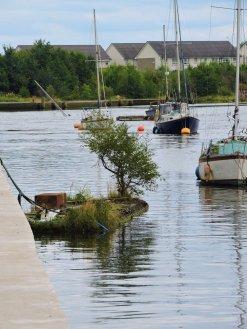 treeboat 1.jpg 2