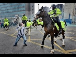 Police horse on duty
