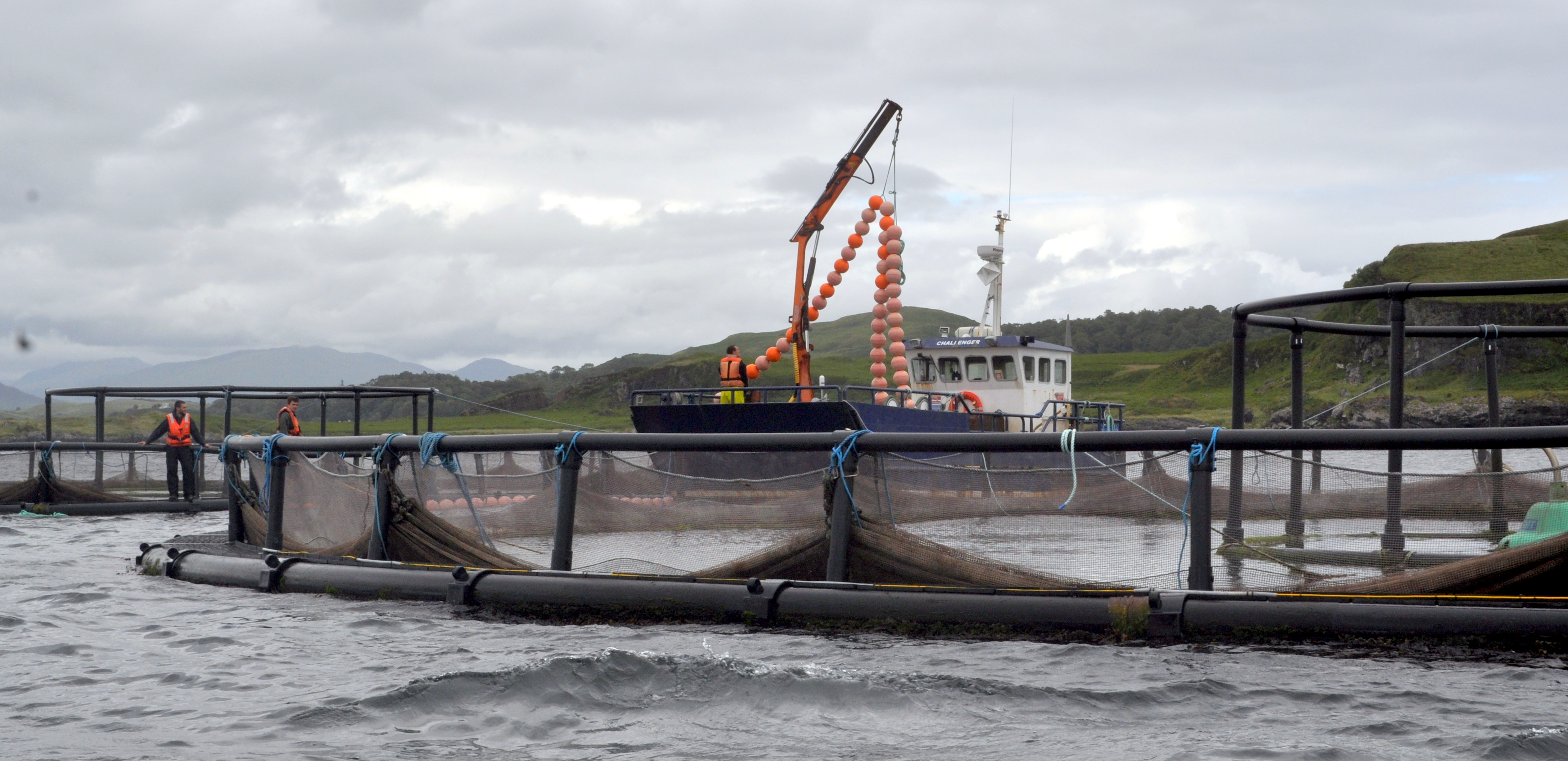ANTI POLLUTION RULES RELAXED FOR SALMON FARMERS