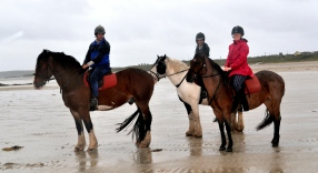 Connacht 9 - Riders to the sea on a soft day at Omey strand in Connemara