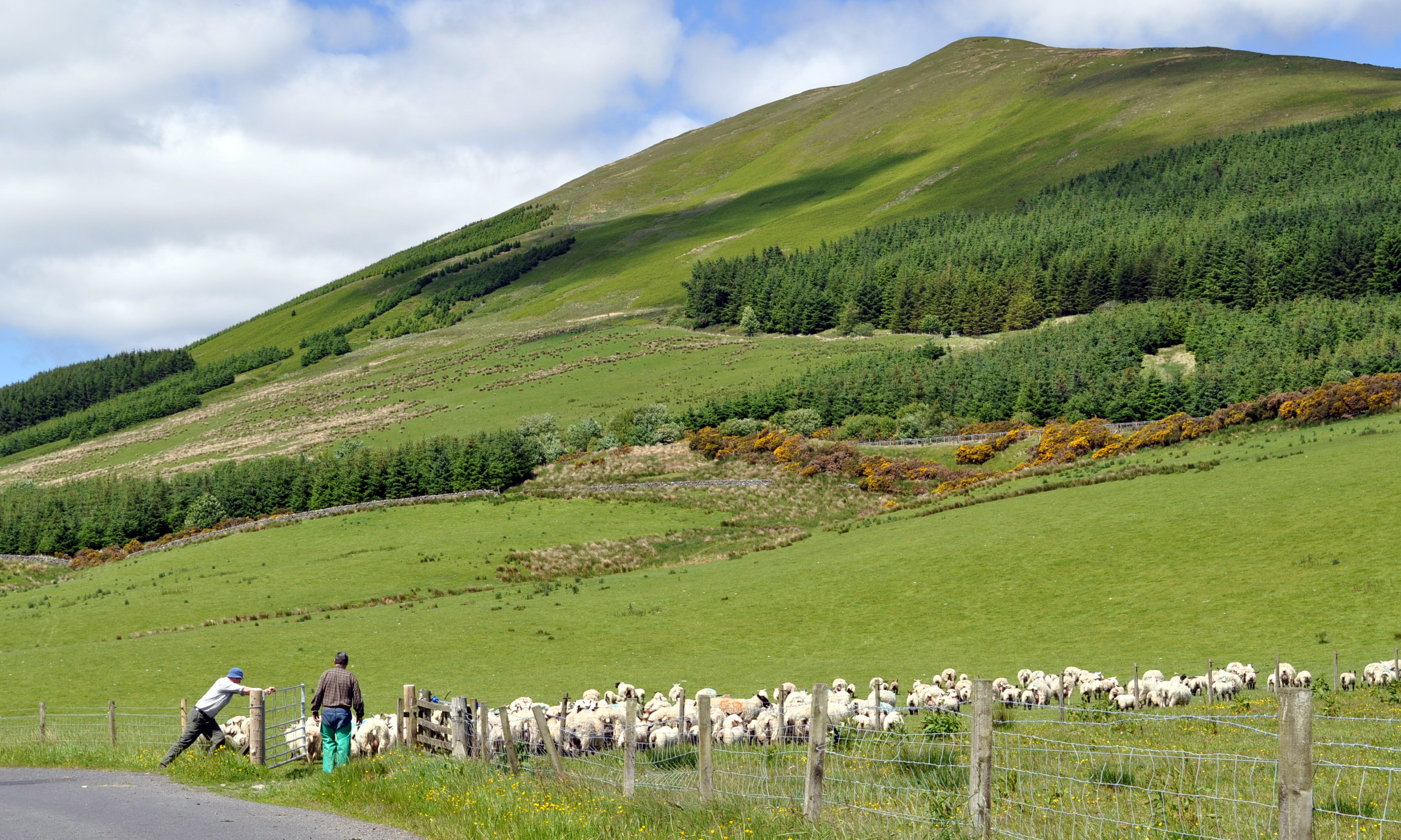 Glorious Glen Fruin where sheep and cattle may safely graze – or maybe not